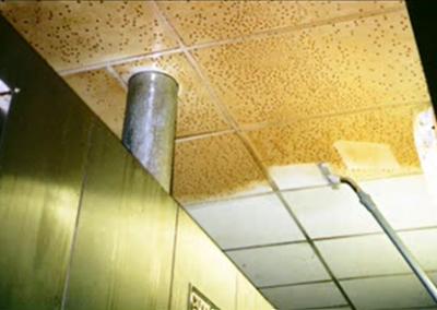 Ceiling1502 (Custom)